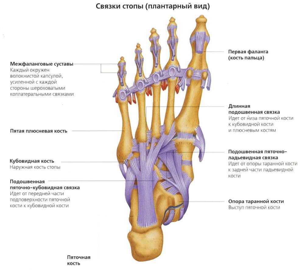 Медиальная сесамовидная кость болит