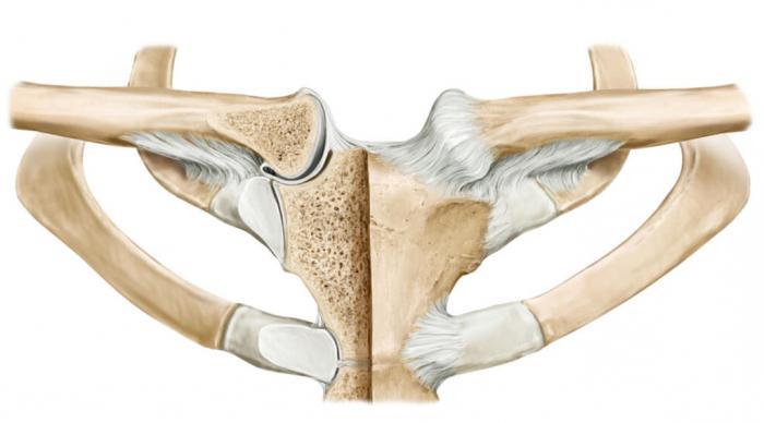 Как делают рентген тазобедренного сустава видео