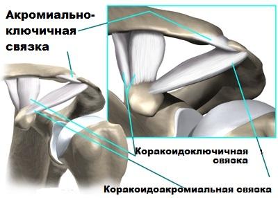 Изображение - Пункция акромиально ключичного сустава akromialno-kljuchichnyj-sustav