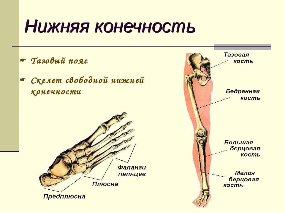 врач по челюстным суставам как называется