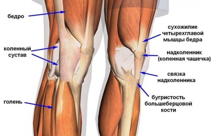 Почему вылетают суставы медовые компрессы на коленные суставы