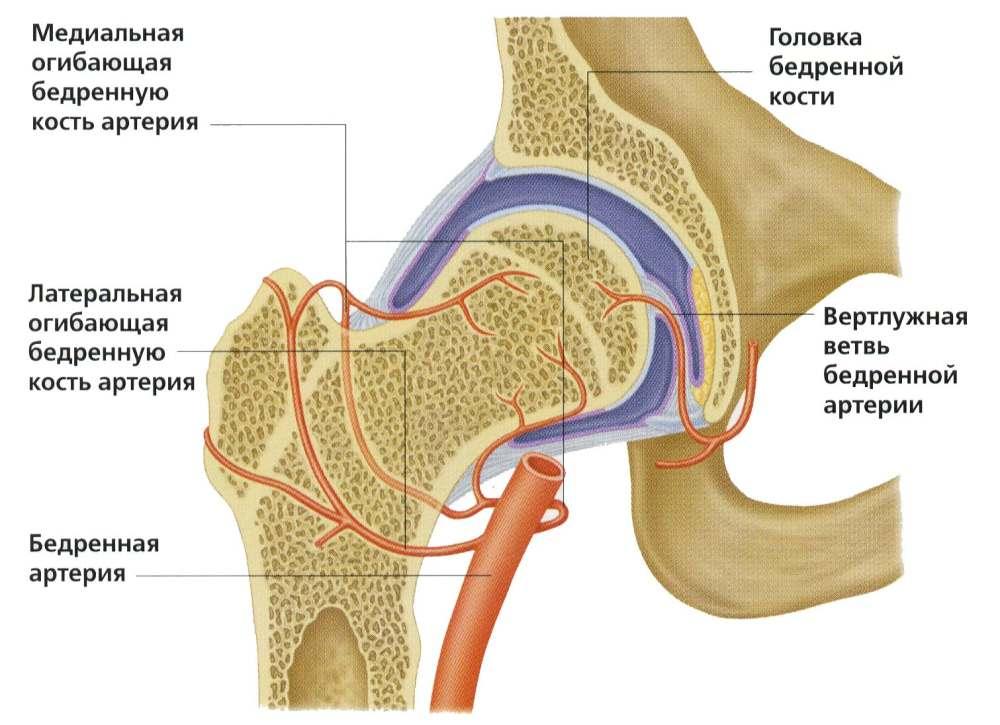 нарушение венозного кровоснабжения в коленном суставе