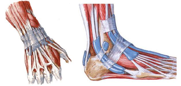 тендовагинит малоберцовых мышц голеностопного сустава