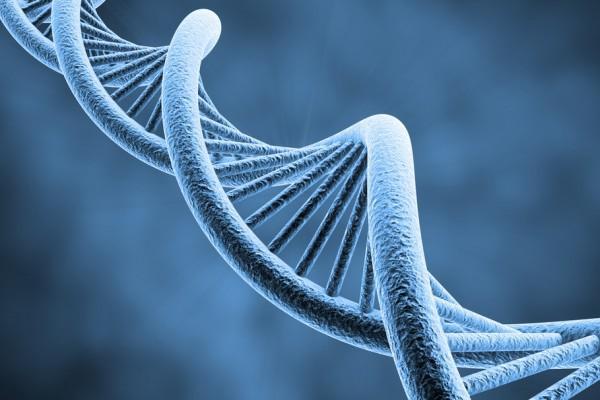 Науспеваемость человека вучебе влияют гены— Ученые