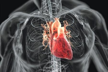 Сердце при ревматизме