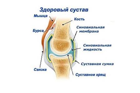 Здоровый сустав