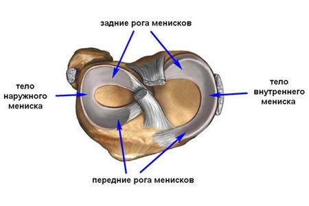 Анатомия менисков