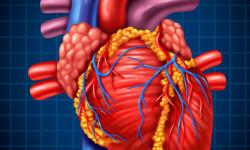Ученые обнаружили ключ к здоровью в сердцебиении