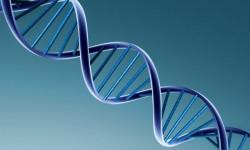 Найдены отвечающие за развитие опухолей мозга гены