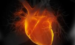 Здоровое сердце улучшает работоспособность мозга