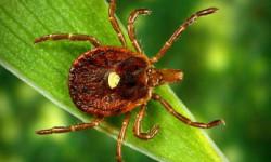 В Челябинской области около 8 тысяч человек пострадали от укусов клещей