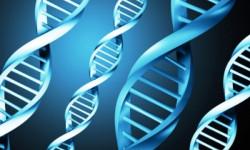 Ученые выяснили связь между ДНК и интеллектом