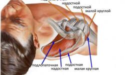 Строение и патология ротаторной манжеты плечевого сустава
