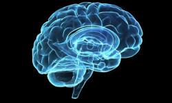 «Мини мозги» помогут ученым в разработке лечения болезни Паркинсона