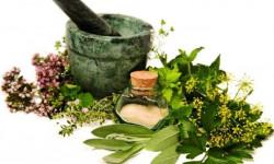 Монастырский чай (сбор) от остеохондроза – состав и рецепт приготовления