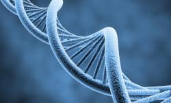 Найдены отвечающие за образование гены