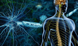 Названа диета для защиты от рассеянного склероза