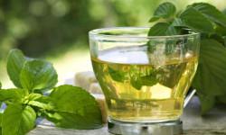 Мятный чай способен улучшить память