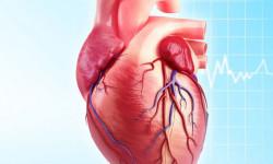 Красноярские врачи успешно справляются с генетическими пороками сердца