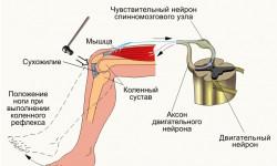 Коленный рефлекс: физиология и патология