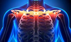 Анатомия и травмы грудино-ключичного сустава