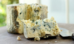 Ученые назвали сыр с плесенью ключом к новым достижениям в медицине