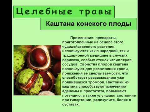 Каштана конского плоды