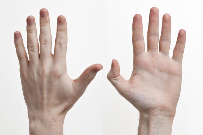 Строение руки человека с названиями
