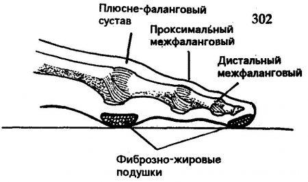 палец, схема