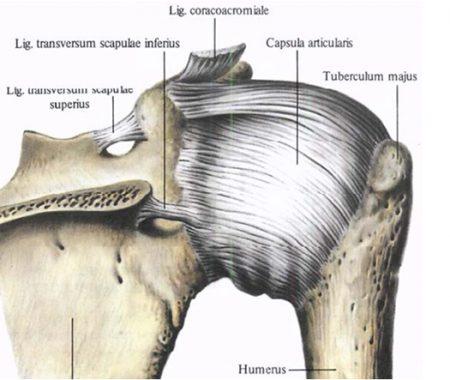 Капсула плеча