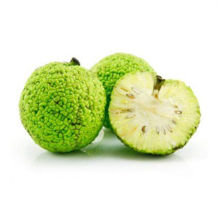 Маклюра плод