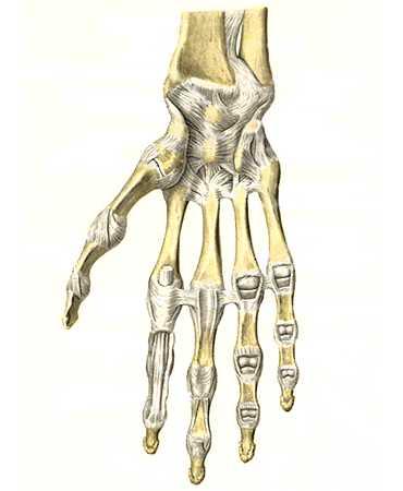 Повреждение связок лучезапястного сустава лечение