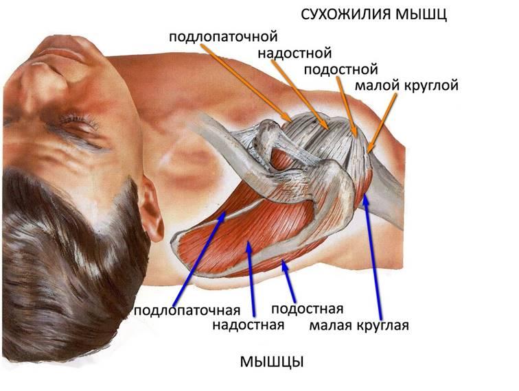 Повреждение ротаторной манжеты плечевого сустава симптомы