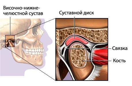 Височно нижнечелюстной сустав: анатомия и особенности